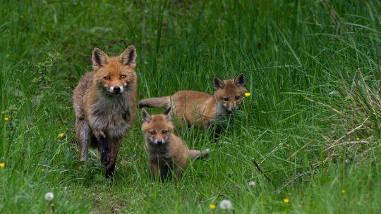 Jagdvergehen in Deutschland