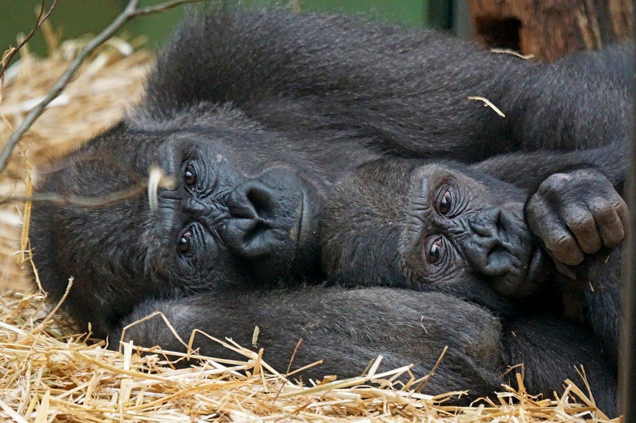 Wer ist der Primat?