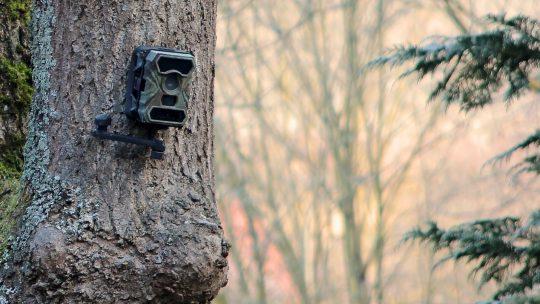 Überwachung in den Wäldern